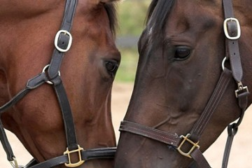 caballos en cabañeros